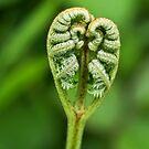 Heart Of A Fern by Susie Peek