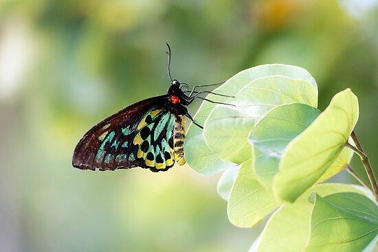 Butterfly  by Jenny Dean