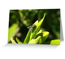 Fly on a Green Leaf Greeting Card