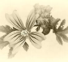 Seasons Past by Christine Lake