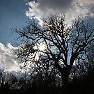 shadows by mkokonoglou