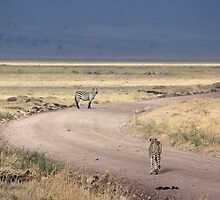 Cheetah and Zebra at Ngorogoro Crater, Tanzania by Hannah Nicholas