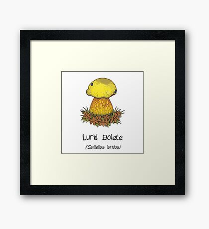 Lurid Bolete (without cartoon face) Framed Print