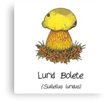 Lurid Bolete (without cartoon face) Canvas Print