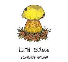 Lurid Bolete (without cartoon face) Photographic Print