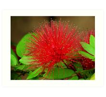 Beautiful Red Flower capture - Series 9 Art Print