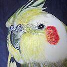 Bird by Steve Osment