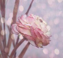 Ranunculus by RosiLorz