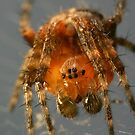 Orange Spider by Stuart Hogton