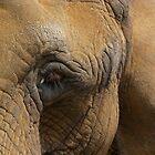 eauty of the elephant by Sandra Willis