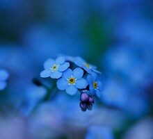Forget me not by RosiLorz
