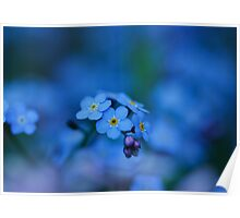 Forget me not Poster