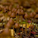 Fungi Forest by Tamarama72