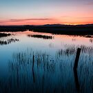 Centennial Marsh at Dusk by Kathleen  Bowman