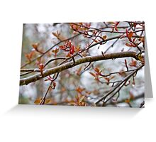 A wet branch Greeting Card