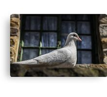 White Dove on Rooftop Canvas Print