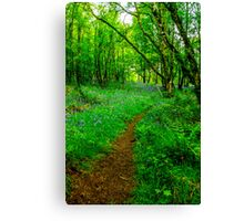 Footpath through the Woods Canvas Print