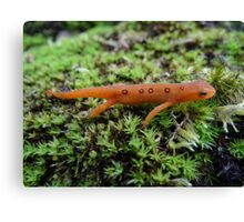 Silly Salamander Canvas Print