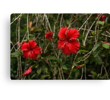 Chaotic Disarray of Red Hibiscus Flowers Canvas Print
