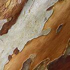 Tree Bark by Irina Chuckowree