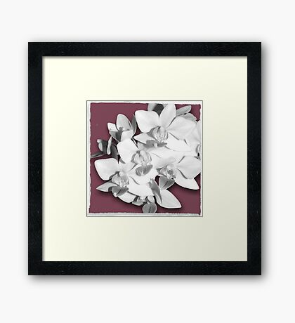 Pretty in Pink, Orchid Photography Art Framed Print