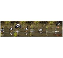 Four Moments in time - A sequence of events at Tidbinbilla Photographic Print