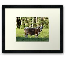 Meet Angus Framed Print