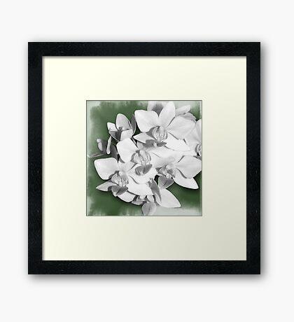 A bit of Green, Orchid Photography Art Framed Print