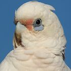 A Little Corella by stevealder