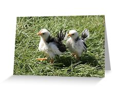 Chick Steps Greeting Card