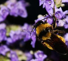 Bumble Bee At Dusk by LorriCrossno