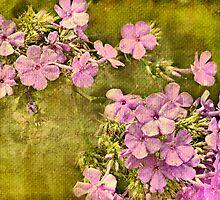Vintage Blossoms by Scott Mitchell