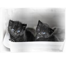 Tiny Kittens Poster