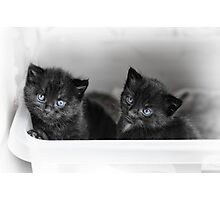Tiny Kittens Photographic Print