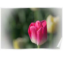 A Tulip in Time Poster