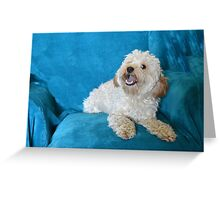 Apricot Cockapoo Greeting Card