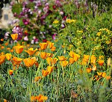"""Poppies Of Mission San Juan Capistrano""  by Glenn McCarthy"