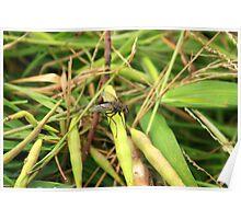 Black Fly on a Leaf Poster