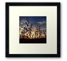 Evening melodies Framed Print