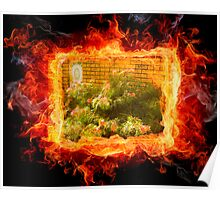 Grevillea in the flames Poster