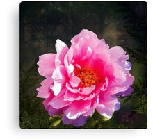Morning Light, a mossy forest and a bright peony flower, landscape Canvas Print