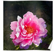 Morning Light, a mossy forest and a bright peony flower, landscape Poster