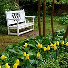 Sitting Among the Tulips.......   ^ by ctheworld