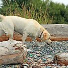 Wet Dog Walking by Lesliebc