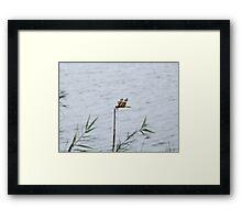 Dragonfly on the Lake Framed Print