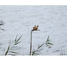 Dragonfly on the Lake Photographic Print
