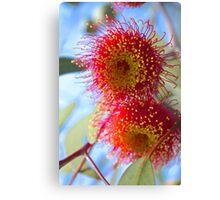 Flowering Gum Canvas Print