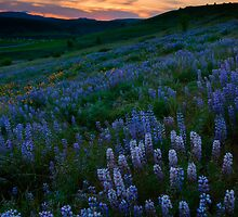 Kittitas Valley Spring by DawsonImages