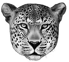 The Leopard Photographic Print