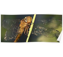 smiley dragonfly Poster